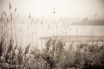 5-Salt Pond